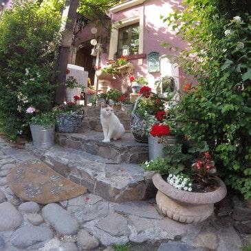 Rumänien – eine Reise ins unbekannte Schöne