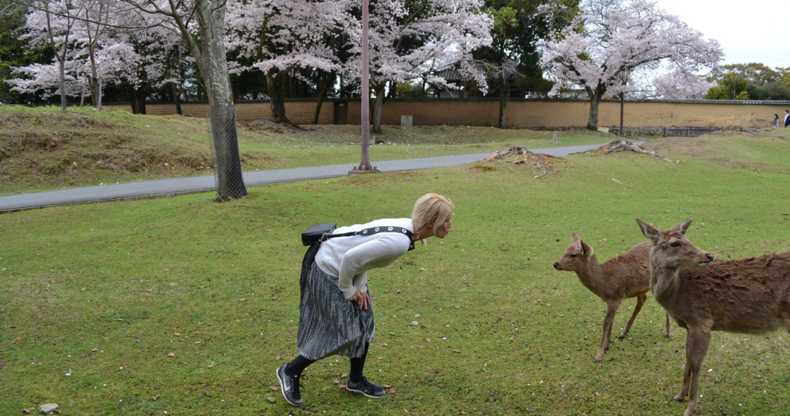 Nara: Hirsche, Shabu Shabu und Mochi