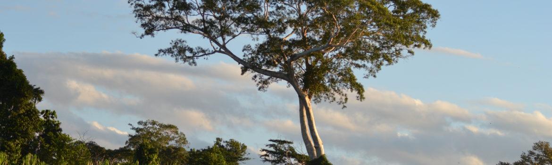 Puerto Maldonado: 2 Nächte im Dschungel von Peru